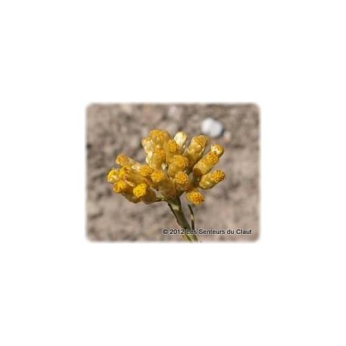 Hydrolat HELICHRYSE ITALIENNE (helichrisum italicum)