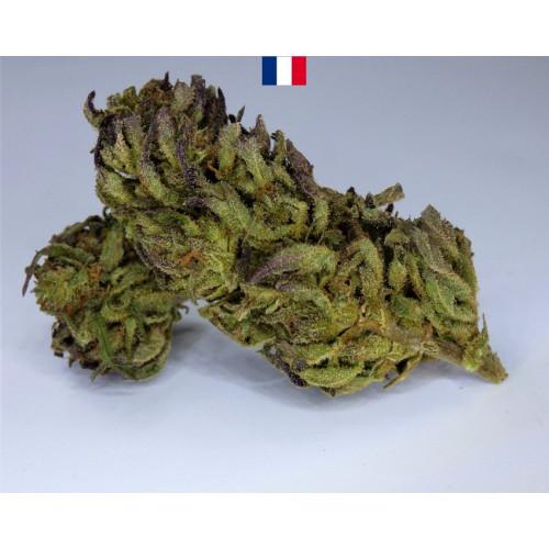CHANVRE des cévennes - production légale France - CBD 6% - Small Buds Lemon